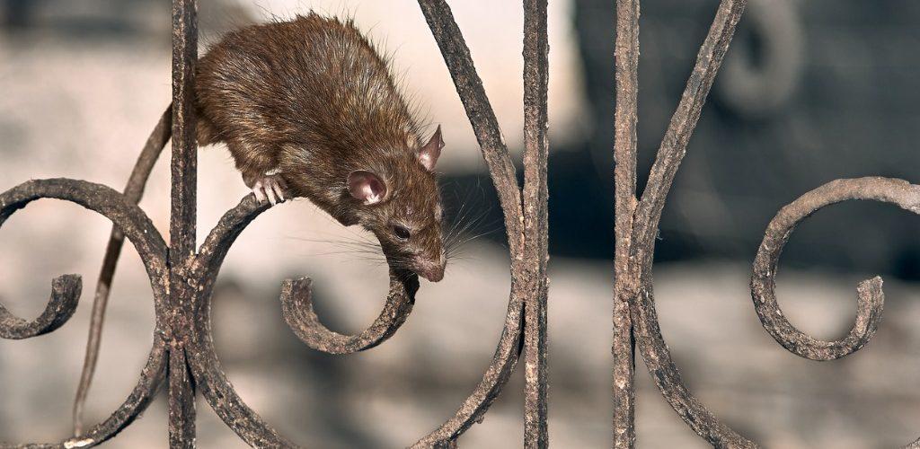 Rodent bait Stationa